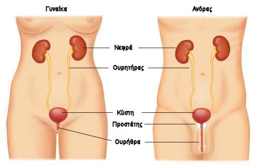 ουροποιητικό σύστημα ανδρών - γυναικών